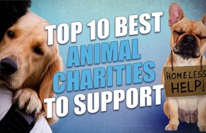 10 Best Animal Charities to Support