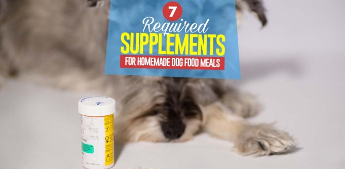 Top 7 Essential Homemade Dog Food Supplements