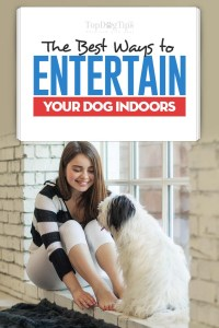 10 Ways to Entertain Dogs Indoors