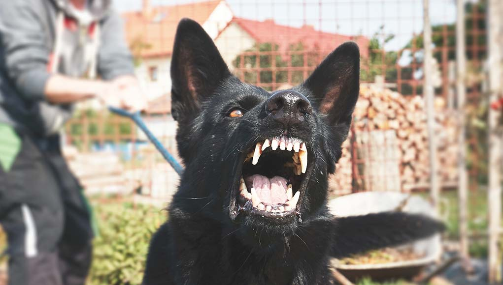 20 Most Dangerous Dogs and Breeds That Are Known for Aggression