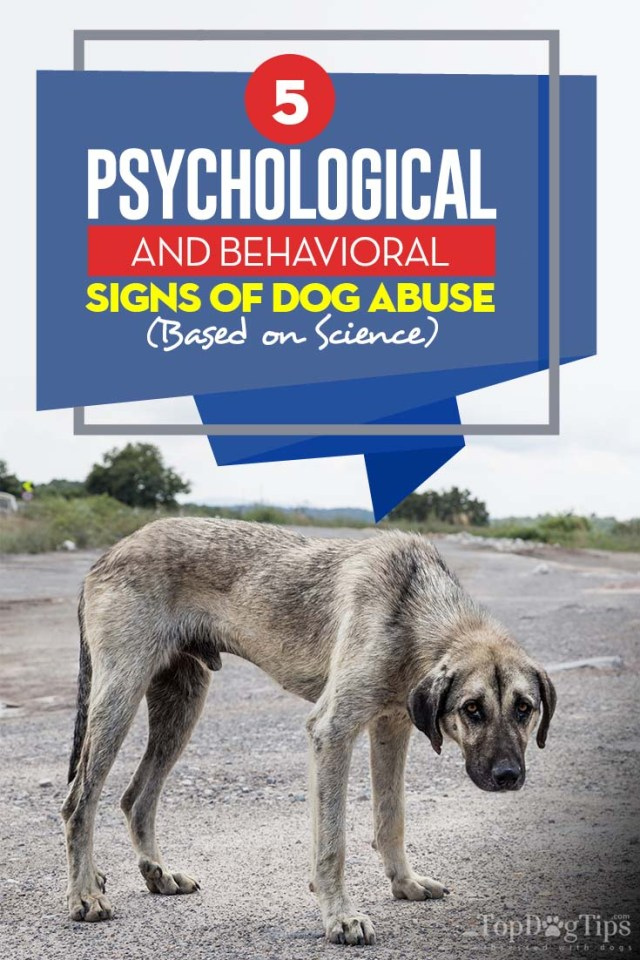 5 Common Signs of Dog Abuse