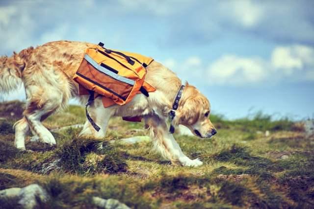 Doggy Saddlebag