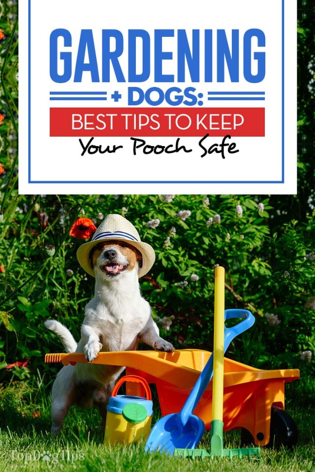 Gardening with Dogs and 9 Tips to Keep Your Pet Safe