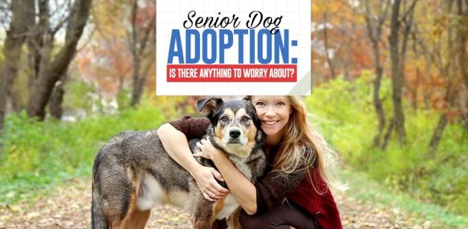 Guide to Senior Dog Adoption