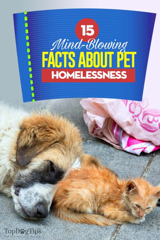 Homeless Pets Facts 2020