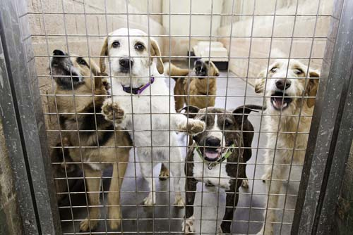 Overcrowding is a Real Problem in Shelters
