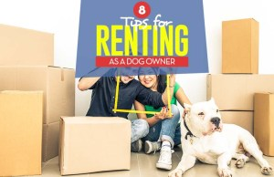 Renting with Dogs - Top 8 Tips for Leasing ApartmentHouse as a Pet Owner