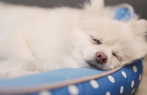 The 9 Best Cooling Dog Bed Brands for Hot Weather