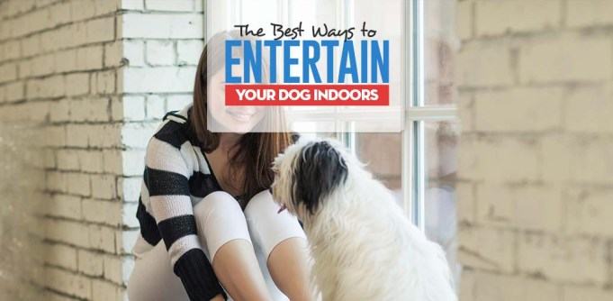 Top 10 Ways to Entertain Dogs Indoors