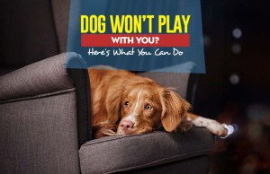 Why My Dog Won't Play With Me