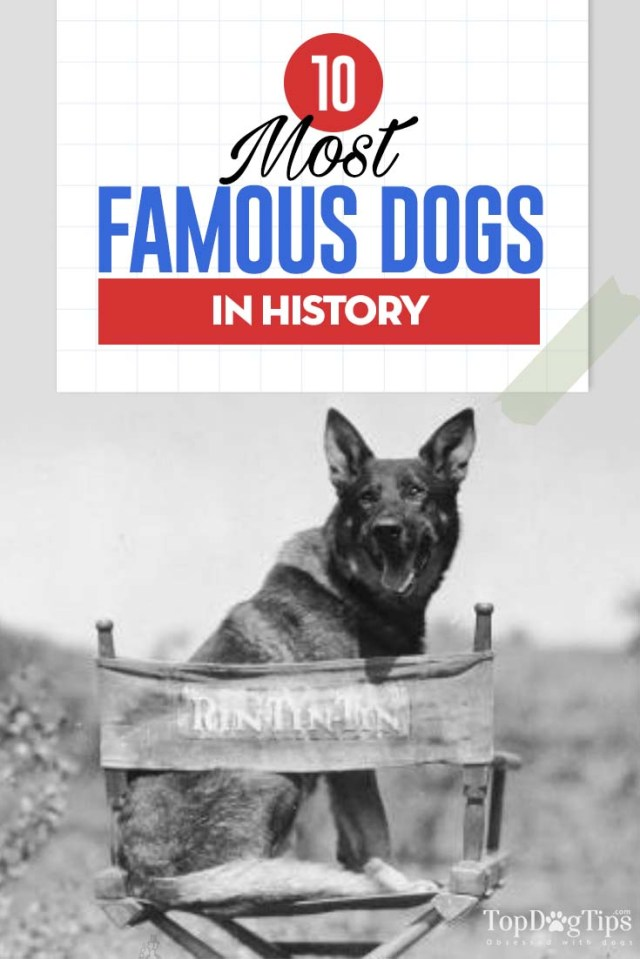 10 Most Famous Dogs in History