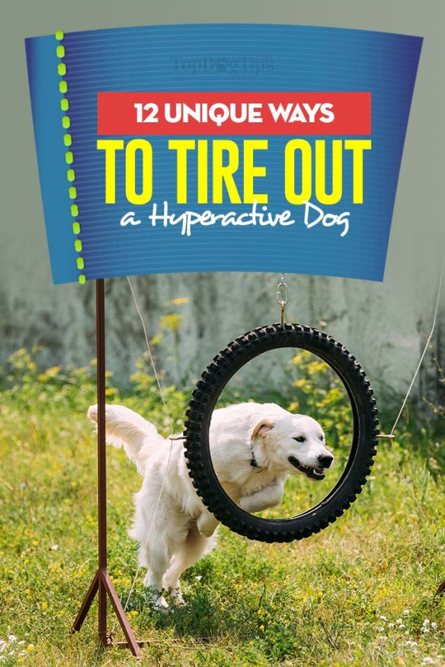 12 Tips on How to Tire Out Your Hyperactive Dog