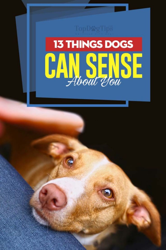 13 Things Dogs Can Sense About You