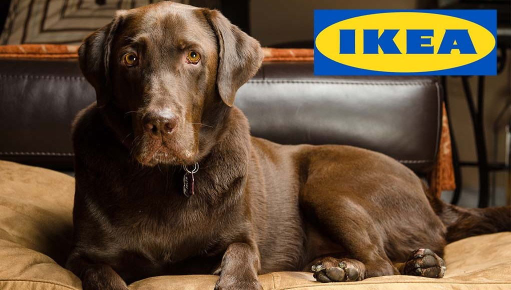 14 Best IKEA Dog Furniture Pieces and Other Items