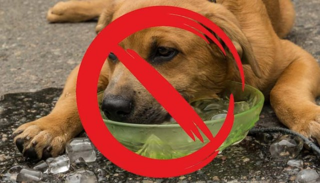 5 Dangerous Ways on How to Cool Down a Dog