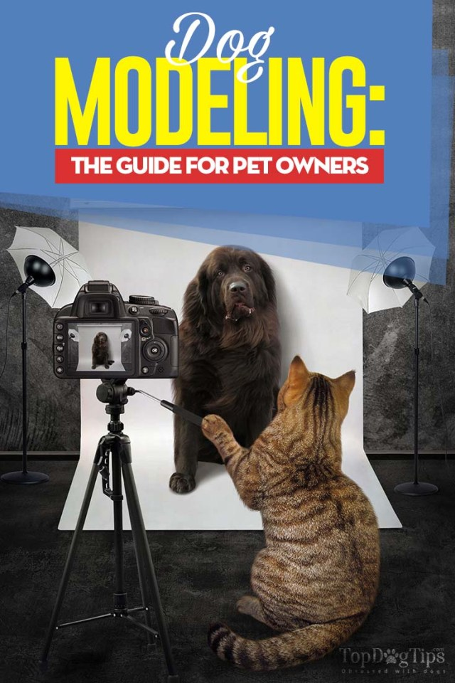 Dog Modeling and Acting - The Ultimate Guide