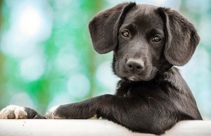Dog Modeling and Dog Acting Guide