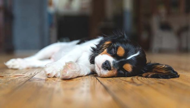 Dog Muscle Spasms - What You Need to Know (and Do)
