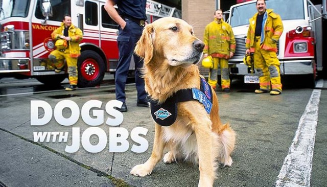 Dogs with Jobs dog documentary