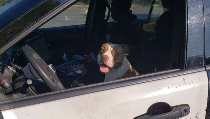 Lost Dog Asks Police for Help and They Assist in Finding Her Family