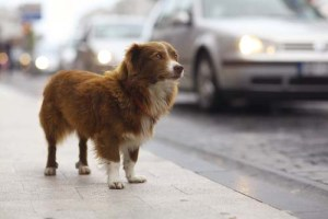 Lost Dogs are More Likely Get Home Thanks to Social Media