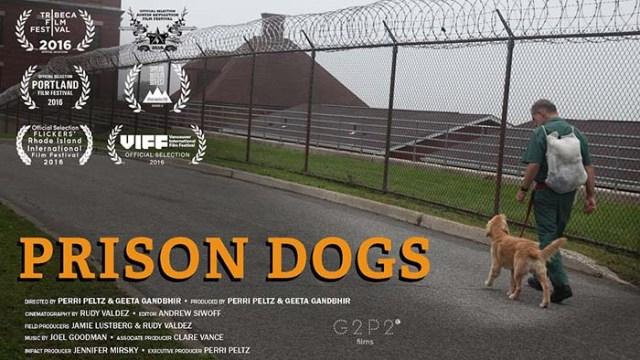 Prison Dogs dog documentary