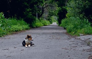 Runaway Dog Overwhelmed With Joy After Reuniting With Owner