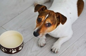 The Best Low Protein Dog Food for Kidney and Liver Health