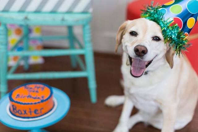 You celebrate your dog's birthday seriously