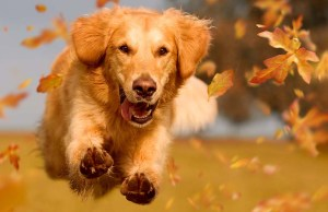 10 Unique Things to Do With Your Dog this Fall