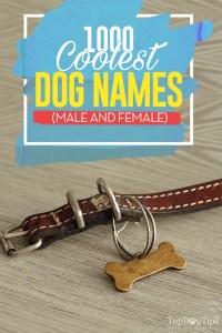 1000 Most Cool Dog Names (male + female)