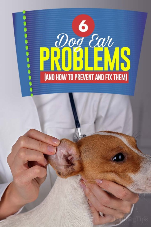6 Most Common Dog Ear Problems with Pictures