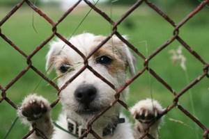 Animal Cruelty at Puppy Mills