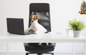 Dogs in the Workplace - Podcast