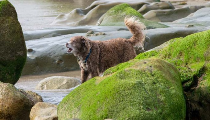 How to Protect Dogs from Risks of Toxic Blue-Green Algae