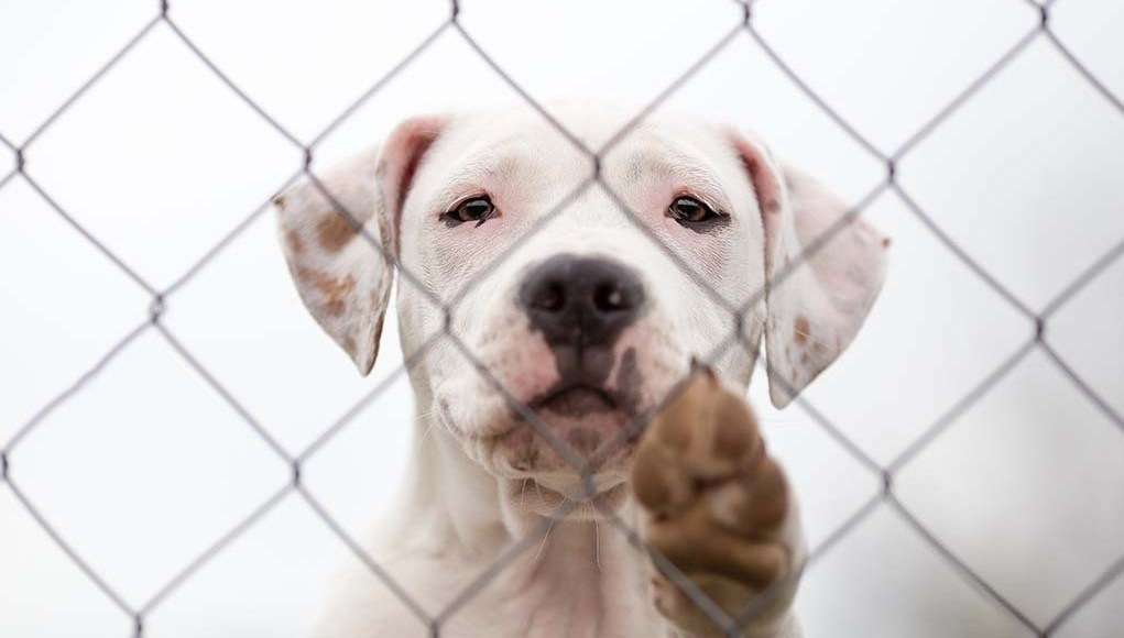 How to Start a Dog Rescue - The Ultimate Step-by-Step Guide