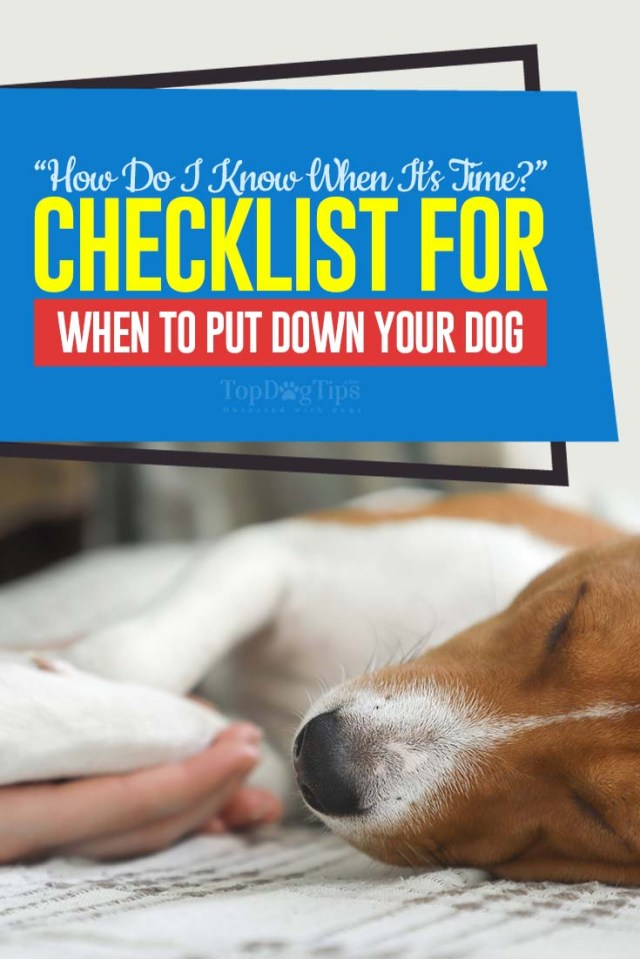 Scale of Life Checklist for When to Put Your Dog Down
