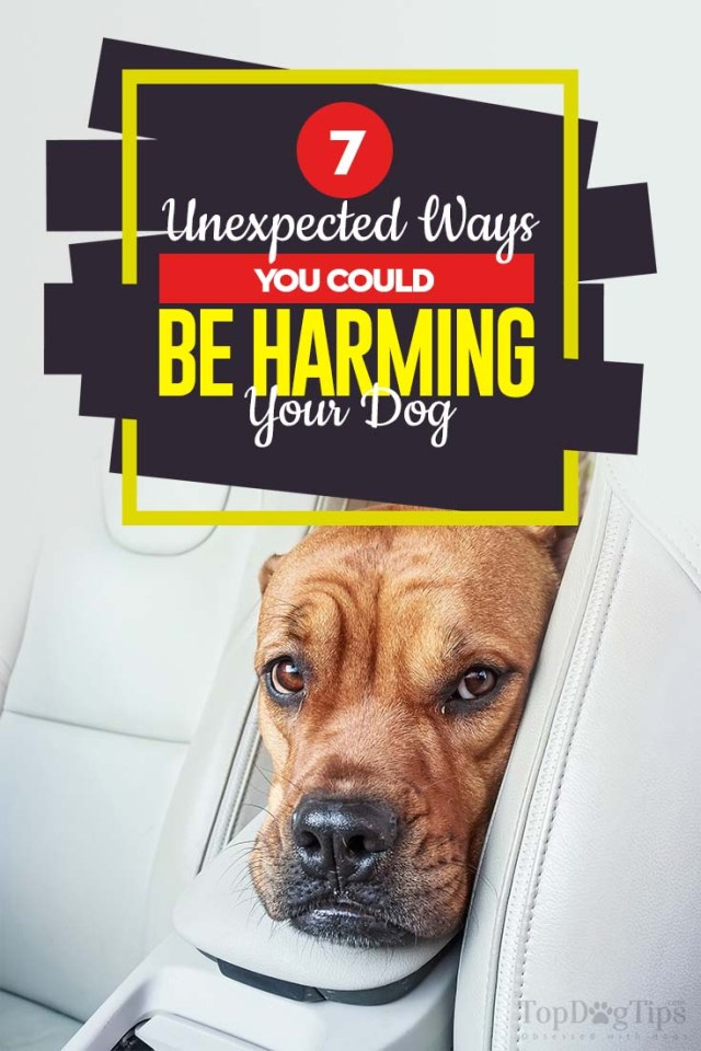 The 7 Ways You Harm Your Dog Without Knowing