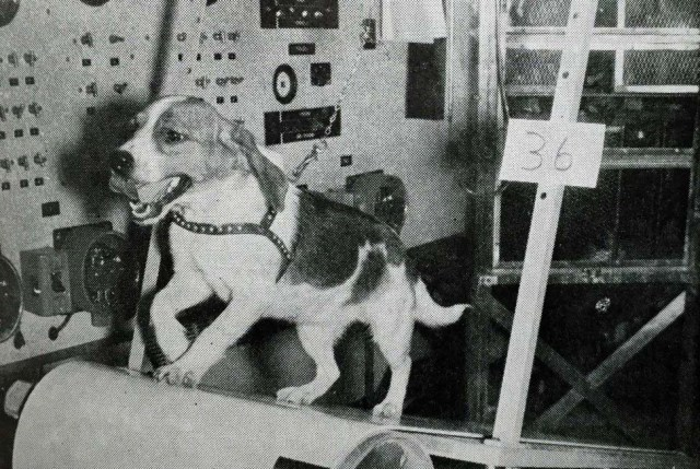 The Animal Welfare Act was enacted in the mid-60s