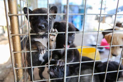 There's been a puppy mill raid