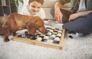 Top 5 Best Dog Board Game Choices