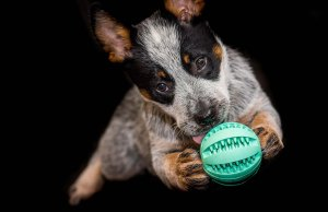 Top 50 Best Interactive Dog Toys