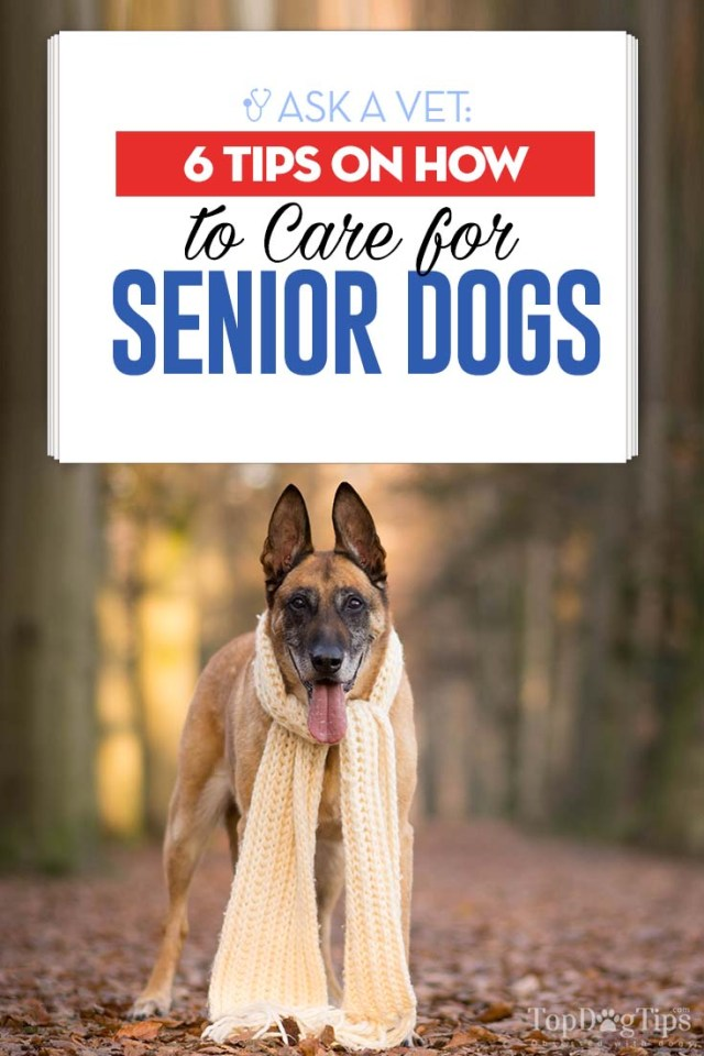 Top 6 Vet's Tips on How to Care for Senior Dogs