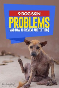 Top 9 Common Skin Problems in Dogs (How to Prevent and Treat Them)