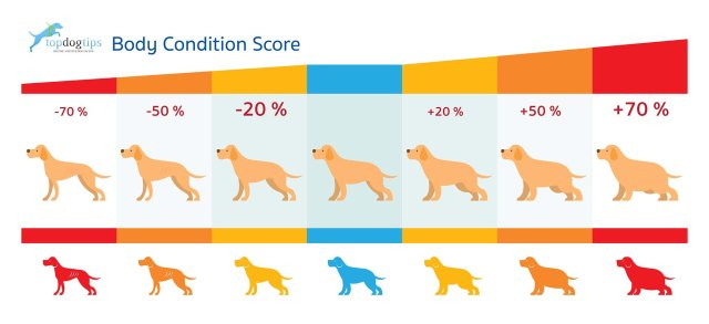 Top Dog Tips Dog Body Condition Score