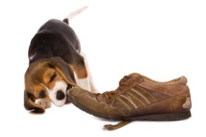 When Dog's Chewing Becomes Problematic
