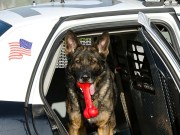 15 Best Police Dog Breeds in the US