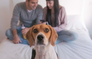 5 Ways Your Smartphone Addiction Is Negatively Affecting Your Dog