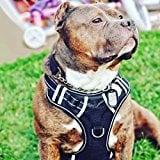 Big Dog Harness No Pull Adjustable Vest