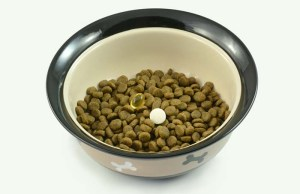 8 Best Dog Supplements for Weight Loss